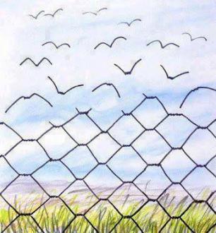 fencebirds